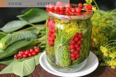 Mit roten Johannisbeeren marinierte Gurken - alle Sommerfarben in einer Dose