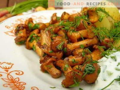Gebratene Pilze - die besten Rezepte. Wie gebratene Pilze richtig kochen und kochen.
