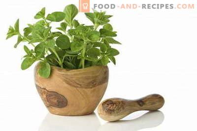 Oregano - Beschreibung, Eigenschaften, Verwendung beim Kochen. Rezepte mit Oregano.