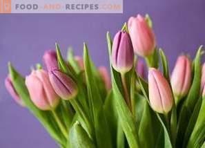 Speichern von geschnittenen Tulpen