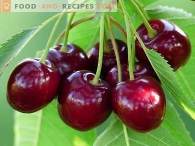 Süße Kirschen: Nutzen für die Gesundheit und Schaden