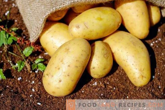 Überprüfung kostengünstiger Mittel zum Vorsähen der Vorbereitung von Kartoffeln auf Krankheiten und Schädlinge