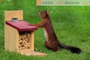 Wie man Erdnüsse aufbewahrt