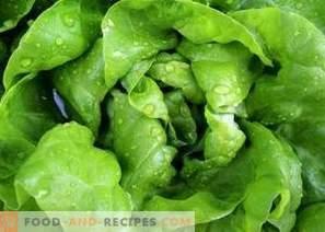 Wie man Salatblätter für den Winter einfriert