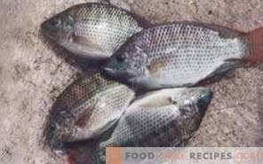 Fisch-Tilapia: Nutzen und Schaden