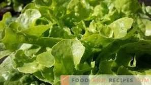 Wie werden Blattsalate aufbewahrt?