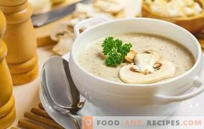 Duftende Champignonsuppen: Schritt für Schritt Rezepte. Bereiten Sie eine einfache Füllung und europäische Cremesuppe mit Champignons vor (Schritt für Schritt)