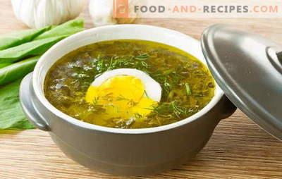 Soupe à l'oseille - charge d'humeur estivale! Recettes pour soupe oxalic avec œuf, boulettes de viande, riz, poulet, ragoût